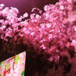 花見シーズン★桜パーティ